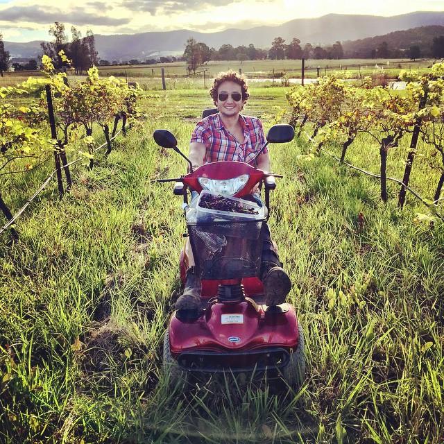 Cruising through the vineyard on a mobility  scooter #greenorganicvineyard #harkhamwine #vineyard #nature